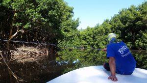 ambiance-mangrove
