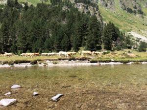Pyrenees peche